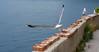 (Marci's) Tags: jonathan seagull capo gabbiano livingston zafferano capozafferano