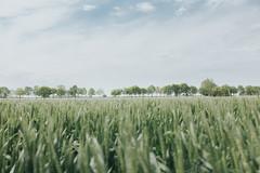 Countryside (thelittlebean_78) Tags: trees verde green primavera film field alberi relax landscape countryside spring natura campagna erba fujifilm paesaggio landscapephotography fujifilmx100s thelittlebean matteofagiolino tribearcipelago lxc03c