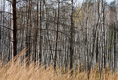 Beauty of forest (kirilko) Tags: autumn forest mushrooms belarus canoneos5d polesie ef24105mmf4lisusm pinsk marshywoodlands