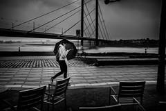 Wet texting (Braiu) Tags: street city urban storm rain umbrella germany walking de wind streetphotography social network dusseldorf dsseldorf nordrheinwestfalen texting