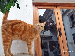 043- (adioslunitaadios) Tags: ventana exterior paisaje gato fujifilm mascota reflejos airelibre gatopelirrojo gatocomn