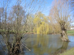 Im Volkspark Mariendorf, Berlin, NGID1871863495 (naturgucker.de) Tags: naturguckerde cwolfgangkatz 915119198 92636685 865714930 ngid1871863495