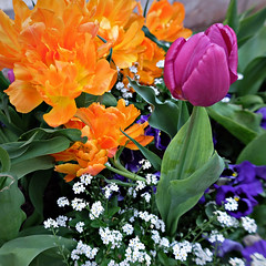 Colors, colors, colors . . . (rotraud_71) Tags: flowers macro spring quadrat badreichenhall streetdecorations