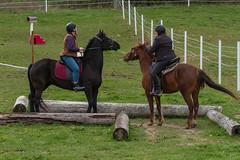 DSCF0360.jpg (Ed Traywick) Tags: horses horse leo robyn obstacles horseclinic