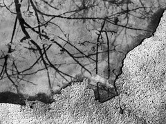 Abstract Texture 1 (Rossdxvx) Tags: trees blackandwhite abstract reflection tree art texture silhouette contrast woods experimental shadows grim outdoor michigan surrealism surreal overlay textures overexposed minimalism textured 2016