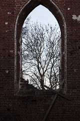 Inner Sanctum (airSnapshooter) Tags: tree brick abandoned church window wall ruins cross poland indoor pomeranian zulawy pomorskie steblewo