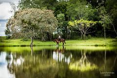 'Mulher gacha..' (Suzana Fernandes Fotografia) Tags: horse rural campo amizade alecrim cavalo aguada gacha prenda aude cabalo campeiro