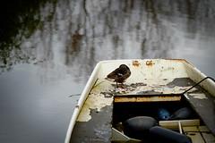 Asleep (Boudewijn Vermeulen) Tags: houses house water boot duck moody village tranquility huis eend dorp huizen broekinwaterland broek bost