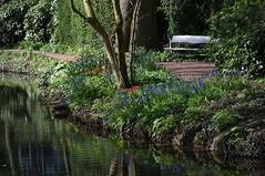 Rotterdam 10-04-2016 SM-8 (Pure Natural Ingredients) Tags: park flowers holland garden spring nikon d70 nederland thenetherlands sigma f18 f28 bloemen euromast zuid 105mm niceweather voorjaar schoonoord d90 50mmoutdoor botanicbotanishetuin