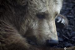 _DSC5881 (alessandro.spagnolli) Tags: zoo ngc natura tamronlens naturalistica lecornelle parcofaunistico sonyalpha77