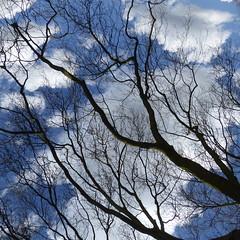 P1120957 (erix!) Tags: clouds branches wolken bluesky ste twigs blauerhimmel zweige