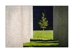 Le Face a Face (Marie 35 (140)) Tags: nature arbre aurlienemours rennesbeauregard bordurephoto alignementsxximesicle