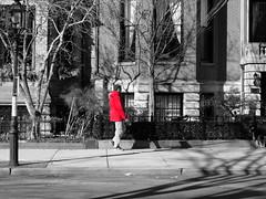 A pedestrian walking on Commonwealth Avenue in Boston (Images by Arden) Tags: street trees blackandwhite bw man guy blancoynegro monochrome boston person fuji random candid massachusetts streetphotography newengland pedestrian fujifilm selectivecolor siyahbeyaz singlecolor imagesbyarden fujifilmxe1 fujifilmxseries fujifilmxq1