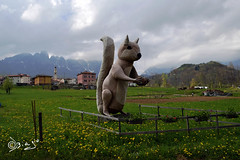 La mascotte di...Staro - Italy (Biagio ( Ricordi )) Tags: italy mountain montagna vicenza scoiattolo pasubio staro recoaroterme vallidelpasubio