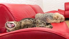 HARRY UND MOTTE (rentmam1) Tags: dog cat harry hund katze motte
