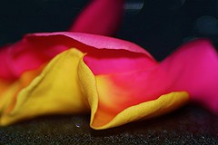 """Macro Mondays """"Begins with the letter P"""" Rose Petals (sylviamay1963) Tags: pink summer rose yellow sunsets p rosepetals tamron90mmmacrolens sonya58 macromondaysbeginswiththeletterp"""