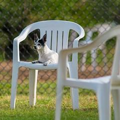 old-girl (hodad66) Tags: dog dogpark melbourneflorida wickhampark minoltaaf200mmf28apoghs minolta200f28 sonya7rii