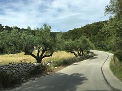 Roadside Olive Trees (RobW_) Tags: trees easter sunday may olive greece zakynthos kampi 2016 01may2016