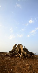 Deadwood Stories: awaiting PK (Ramesh Adkoli) Tags: landscape ganeshgudi capturenx d800e