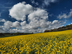 Spring (Tim Gardner pics) Tags: