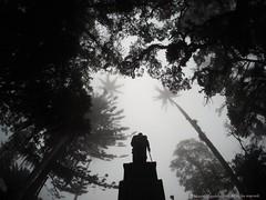 Domingo de invierno (Ivan Mauricio Agudelo Velasquez) Tags: tree arbol colombia monumento bolivar invierno palma estatua niebla libertador antioquia