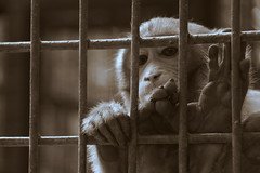 Prison Life - V (Rafee Mizan Khan Chowdhury Niloy) Tags: people nature canon garden botanical zoo wildlife photowalk dhaka mirpur 70d