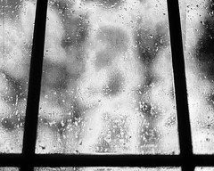 Through The Weeping Glass # 2 (SopheNic) Tags: trees blackandwhite bw monochrome rain night bush iso400 screen 35mmfilm hp5 ilford selfdeveloped id1111 canonelan7e