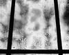 Through The Weeping Glass # 2 (SopheNic (DavidSenaPhoto)) Tags: trees blackandwhite bw monochrome rain night bush iso400 screen 35mmfilm hp5 ilford selfdeveloped id1111 canonelan7e