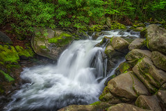 Tremont 073, 05/01/2015 (RJ Wilner) Tags: park morning trees water river landscape waterfall moss spring flora rocks stream waterfalls rivers cascades streams nationalparks tremont 2015 greatsmokymountainnationalp