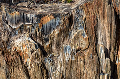_DW18899.jpg (Upstate Dave) Tags: petrifiedtree theodorerooseveltnationalpark 2013 northdakota