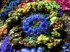 LBS-close3756 (freeform by prudence) Tags: crochet organic freeform prudencemapstone