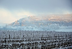 Matin givr  -  Covered in frost morning (Philippe Haumesser Photographies) Tags: trees winter france cold fog outside reflex vines nikon frost hiver hill arbres vineyards alsace vignes vignoble froid brouillard elsass colline givre 2016 d7000 nikond7000