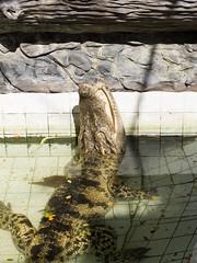 P1092399 (tatsuya.fukata) Tags: elephant thailand crocodile samutprakan crocodilefarm