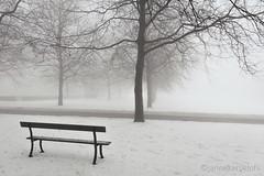 still (janneke.roelofs) Tags: winter mist sneeuw bank wit buiten alleen bankje stil lonelyseats