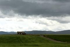 Shelter From the Storm (LookSharpImages) Tags: wyoming jacksonhole jacksonholewyoming