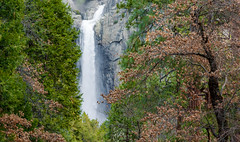 Yosemite Fall (Rohit KC Photography) Tags: california park ca trees fall nature water canon landscape waterfall vibrant edited national yosemite refreshing inspiring canon24105mmf4l canon5dmarkii