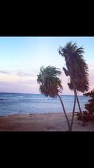 #Happy #Week #Caribe #puntacana desde 810 #rivieramaya desde 899 #promo #oferta #especial #vacaciones #playa #arena #sol #relax #mojito #telomereces #felicidad #tumbona #atardecer #playa #sonrie #tupuedes viajes@Cevex.es (Cevex Madrid) Tags: sol relax atardecer happy promo playa arena mojito week felicidad rivieramaya vacaciones puntacana oferta especial caribe sonrie tumbona telomereces tupuedes