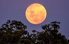 corowa moon rise (robertmilesdesign) Tags: landscape australia moonrise australianlandscape