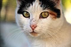 2015_Aralk_34 (zonacsreen) Tags: pet cats animal cat pussycat