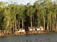 Mangrove Papua Pomako Timika INDONESIA Vilage at Pomako Village (eriko_ie) Tags: indonesia mangrove papua vilage timika pomako
