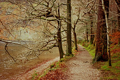 the path by the lake (Ron Layters) Tags: leica trees winter england lake water leaves path lakedistrict slide lakeside velvia shore cumbria transparency fujichrome wastwater gravel wasdale lakedistrictnationalpark mutedcolours r62 leicar62 ronlayters slidefilmthenscanned