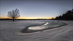 Amanecer (Jose Cantorna) Tags: snow cold nikon nieve amanecer árbol monte frío hielo euskadi araba álava d610 opakua entzia