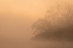 Like The Back Of My Hand (gseloff) Tags: fog sunrise landscape texas pasadena armandbayou kayakphotography gseloff