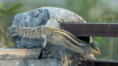 Squirrel on Rails...