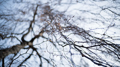 (Jan Durst) Tags: tree art dof stuttgart bokeh sony dream 420 crispy cheers buds lovely 0711 midday 237 knospen trauerweide a7s voigtlnder35mmf14