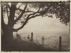 Mystified (YAZMDG (15,000 images)) Tags: mist sepia rural fence mono australia nsw posts barbwire edits fenceline mullumbimby paddocks mystified mistylandscapes snapseed