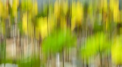 Camera drawing (Tang Waichong) Tags: green nature yellow lotusflowers