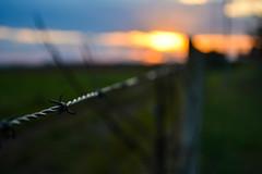 DSC_0335 (brunobalen) Tags: sunset sun sol field wire campo arame farpado pr