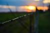 DSC_0335 (brunobalen) Tags: sunset sun sol field wire campo arame farpado pôr