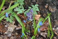 DSC_0072 (Rinswid) Tags: park nature animal spring kharkov feldman ecopark